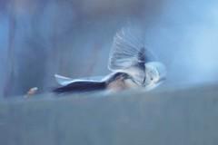 Vögel B