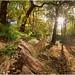 Autumn  Woodland by SFB579 Namaste