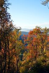 Colori d'autunno nei boschi appenninici