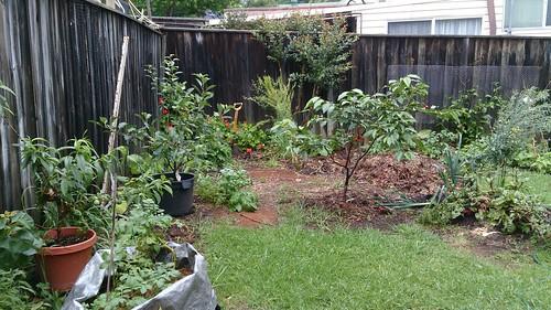 Garden November 2015