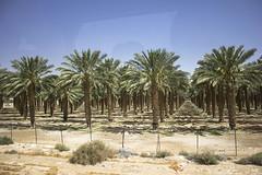 Dead Sea & Jordan Rift Valley 009