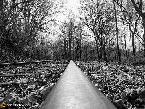 railroad blackandwhite bw monochrome lumix mono outdoor tracks northcarolina panasonic murphy fz200