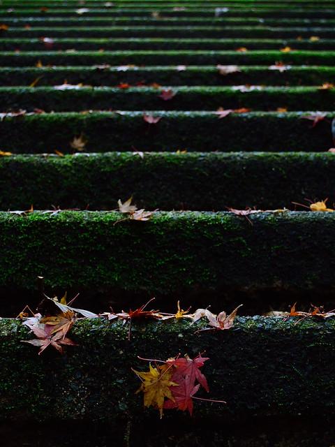 冬への階段