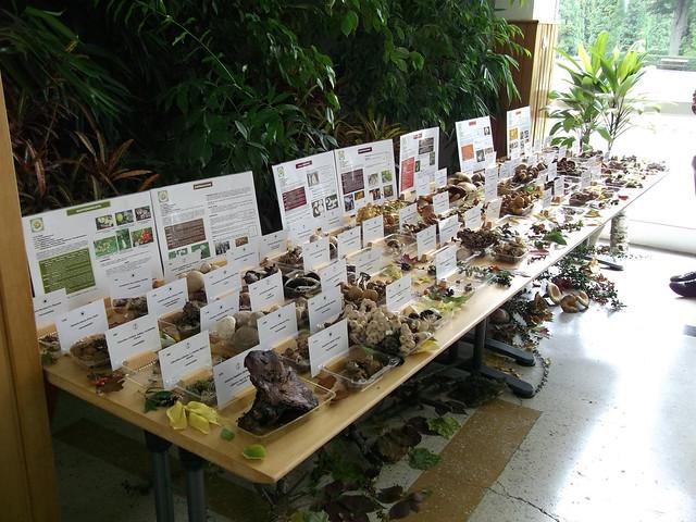 Expozitie ciuperci 2013