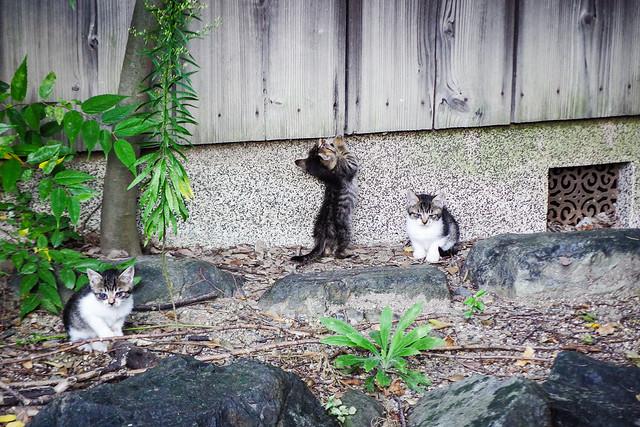 Today's Cat@2015-10-07