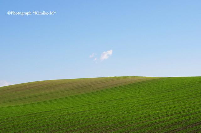 秋まき小麦の丘②