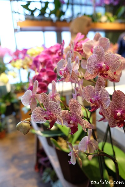 ORchid Culture (11)