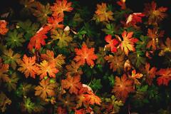 Mysteries of Autumn