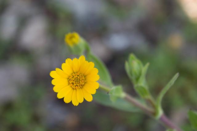 Η όμορφη φύση της Ψίνθου κατά το διάστημα των Αλκυονίδων ημερών του Ιανουαρίου (2017)
