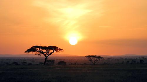tanzania tansania afica afrika safari nature natur