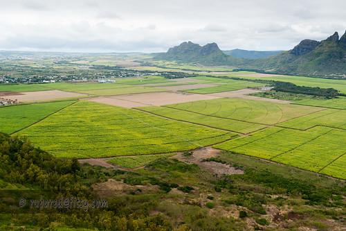 agriculture hike mountstpierre mauritius reservoir sugarcane mountain bambous rivièrenoiredistrict mu