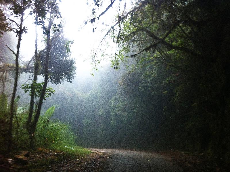 mount irau mossy forest (3)