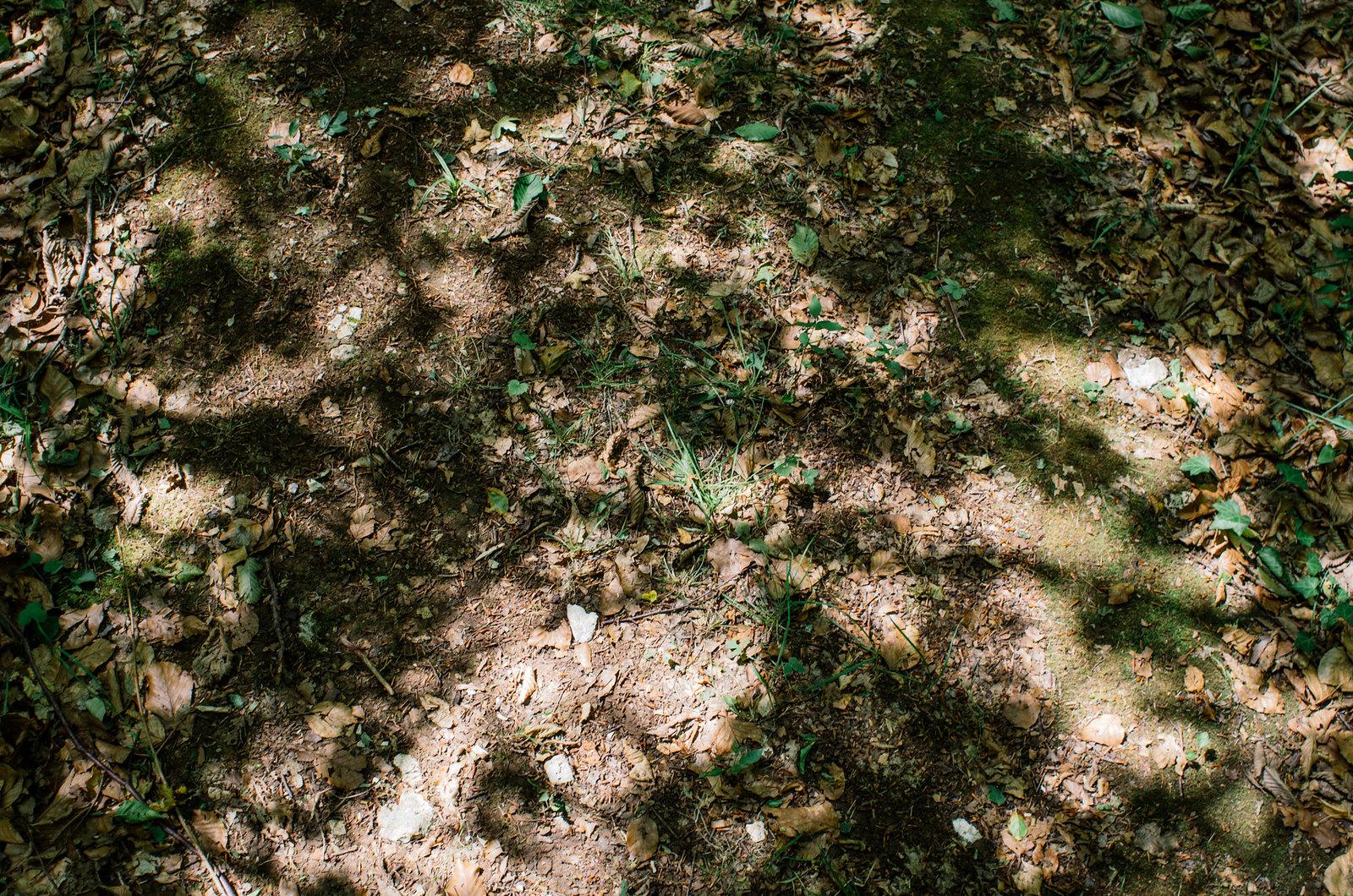 Observer les animaux - Forêt d'Auberive - Treillis lumineux