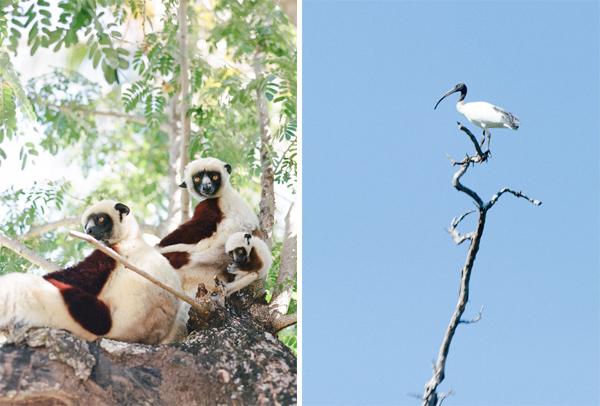 RYALE_Madagascar_Blog3_018