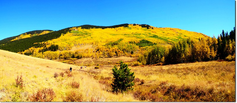 Fall colors at Kenosha Pass, Colorado (2)