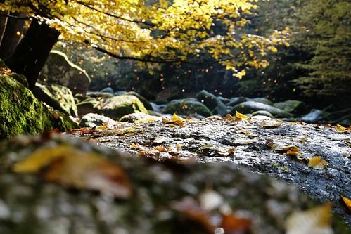 autumn fall leaves rain creek river austria herbst bach fallen mirage fluss spiegelung oberösterreich mühlviertel defoliate feldaist aisttal