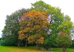 Trær med høstfarger på Bygdøy