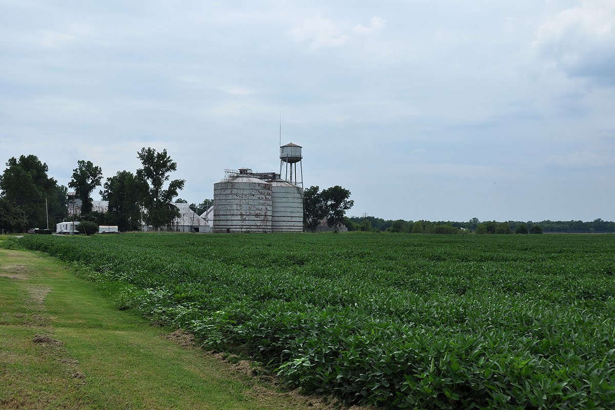 Mississippi tunica county dundee - Usa Field Mississippi Outdoor Blues Bluesmusic Clarksdale Bluestrail2014 Soyabeancrops