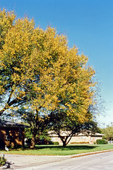 Fall Colors, North Richland Hills, 1994