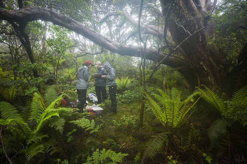 Banding in The Nature Conservancy's Waikamoi Preserve