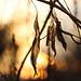 I've Seen It Raining Fire in the Sky by Cam Miller 2016
