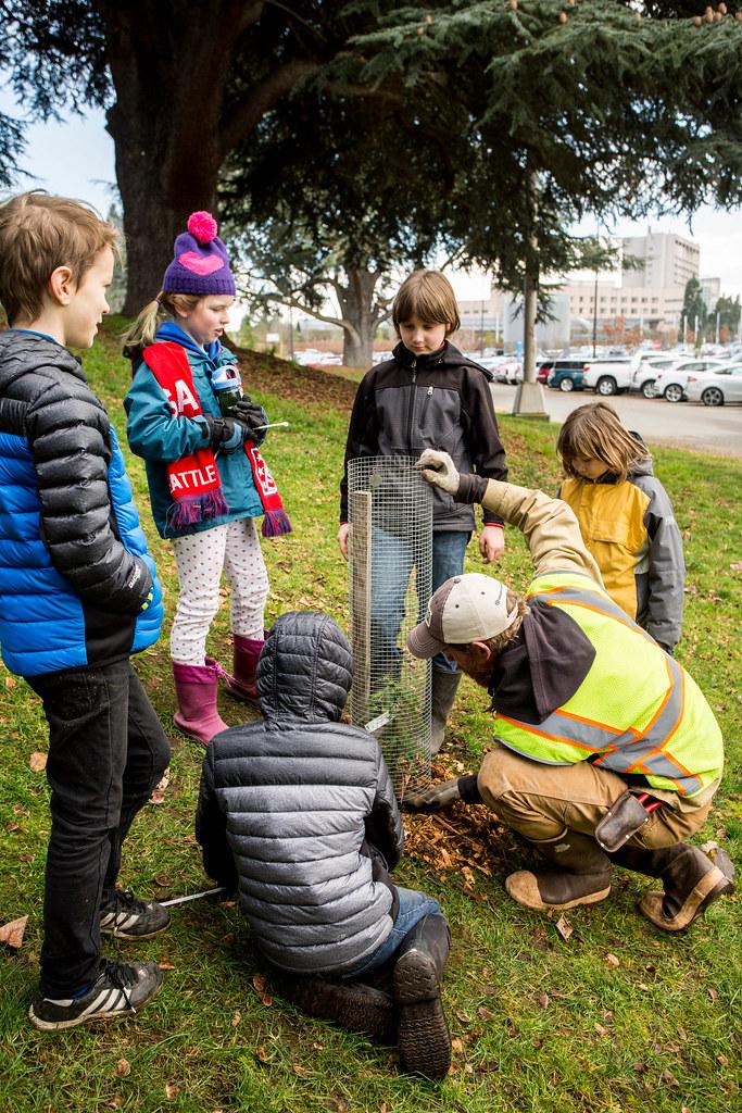 redwood-tree-planting-166