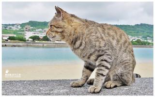 貓島(奧武島)中本鮮魚天婦羅-39