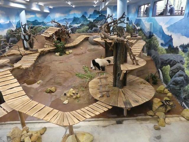 Pandaanlage, Ouwehands Dierenpark, Rhenen