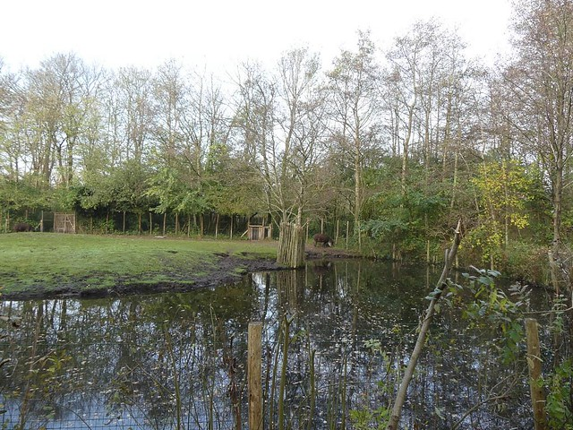 Anlage für Tapir und Capybara, AquaZoo Friesland