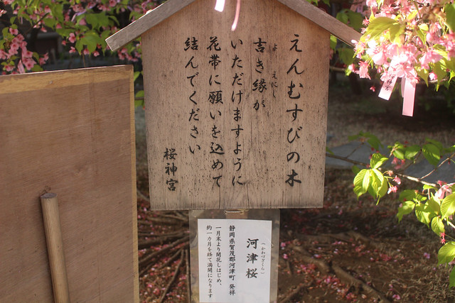 sakurajingu-gosyuin040