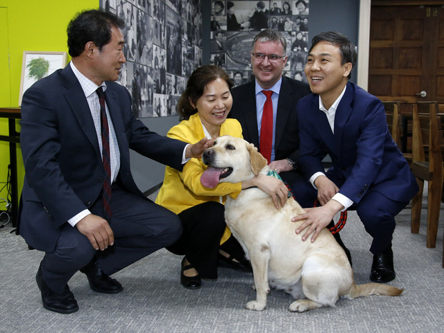 The City of Jeonju and Animal Protection Group Work Together to Send Rescued Dogs from Osongje to Their Forever Homes!