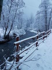 Fuori impazza la bufera: posto questa foto prima che torni la primavera e la faccia apparire...scaduta!  #Antey-Saint-Andrè #ValledAosta #lavallée #neve #snow #nevicata #ponte #fiume #alberiinnevati