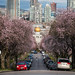 Seeking Sakura 🌸🌸🌸🌸 Vancouver, BC by Michael Thornquist