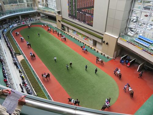 福島競馬場のパドックの形