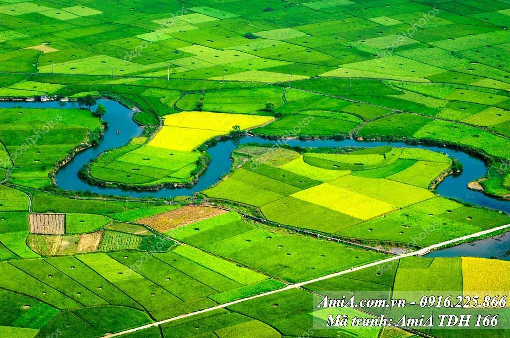 AmiA 166 - Tranh phong cảnh đồng quê xanh mát việt nam