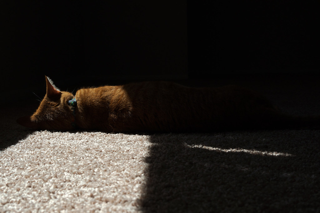 Our orange tabby cat Sam sleeps in a sunbeam in our home in Scottsdale, Arizona