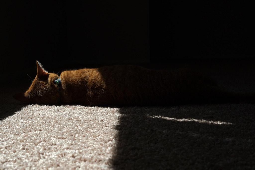 Our orange tabby cat Sam sleeps in a sunbeam in our home in Scottsdale, Arizona