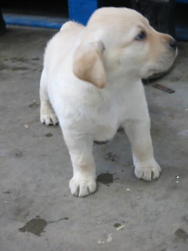 Lu s pup