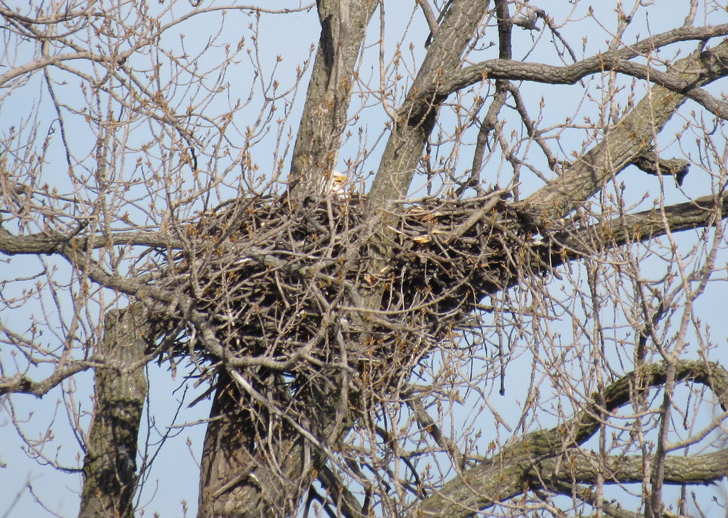 Spring Lake Eagle Nest