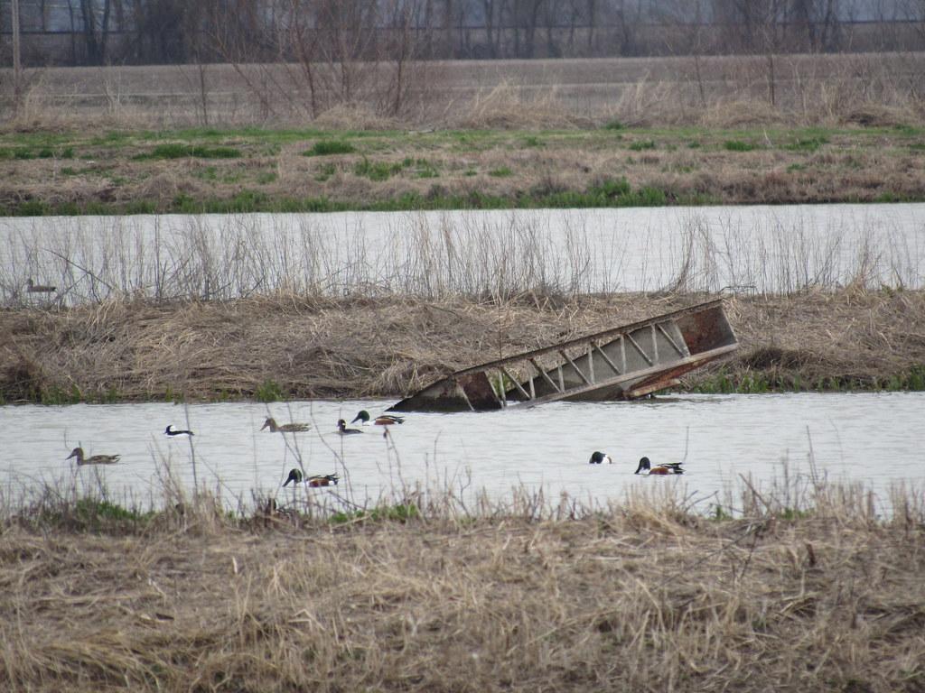 Gorham Duck Ponds