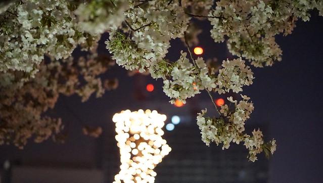 DSC07744みなとみらい夜景散歩