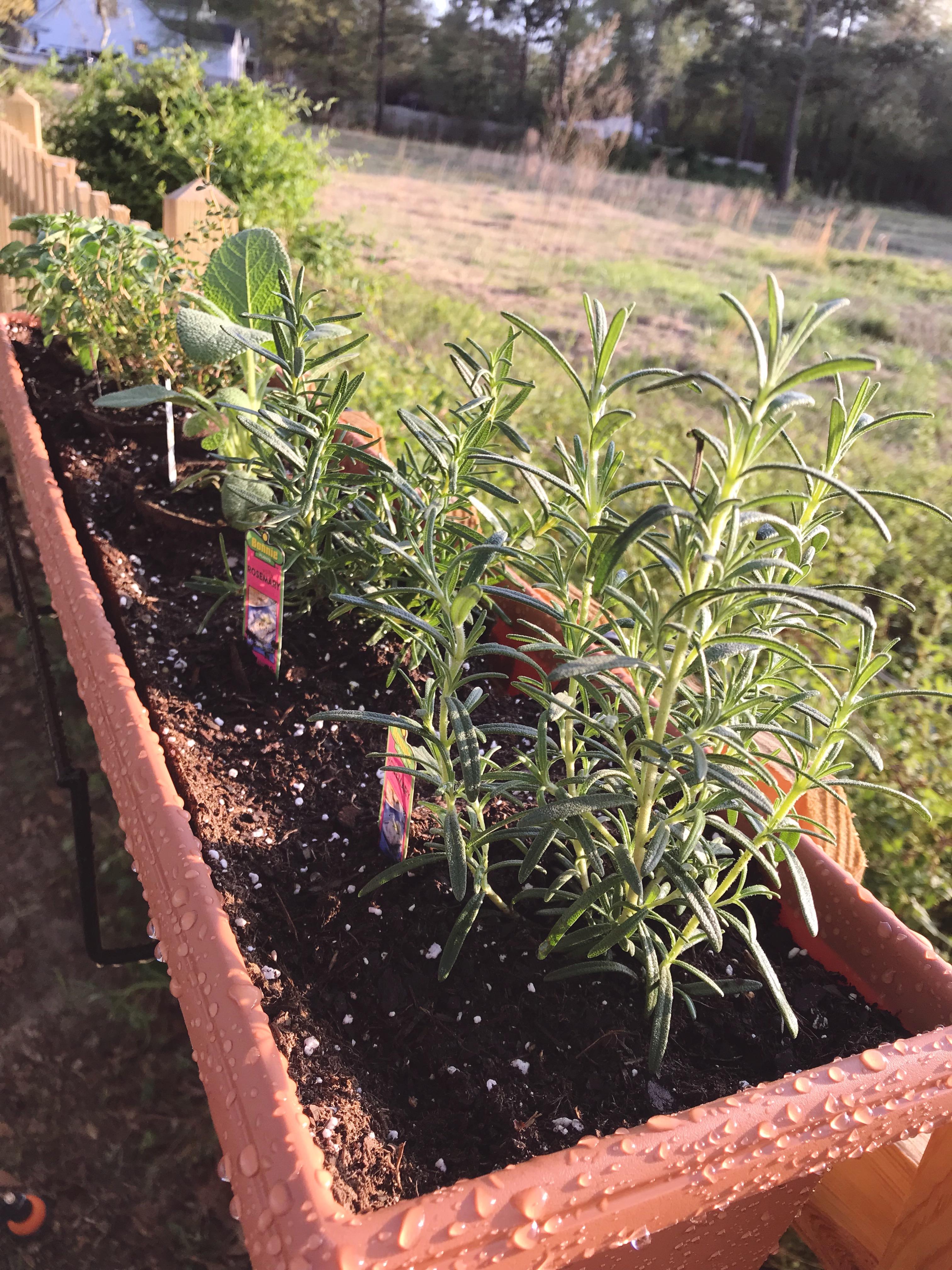 herb garden (1)