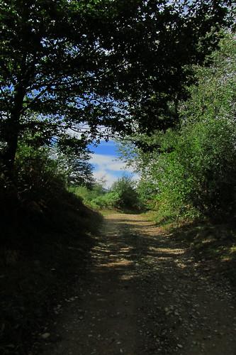 20120925 27 081 Jakobus Wald Weg Bäume Wolken