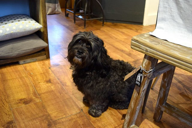 Cute Dog at The Living Lounge, Canterbury