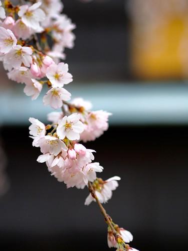 180319_Kyoto-016