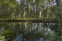 Reflections of the Charente in autumn-2 - Photo of Mérignac