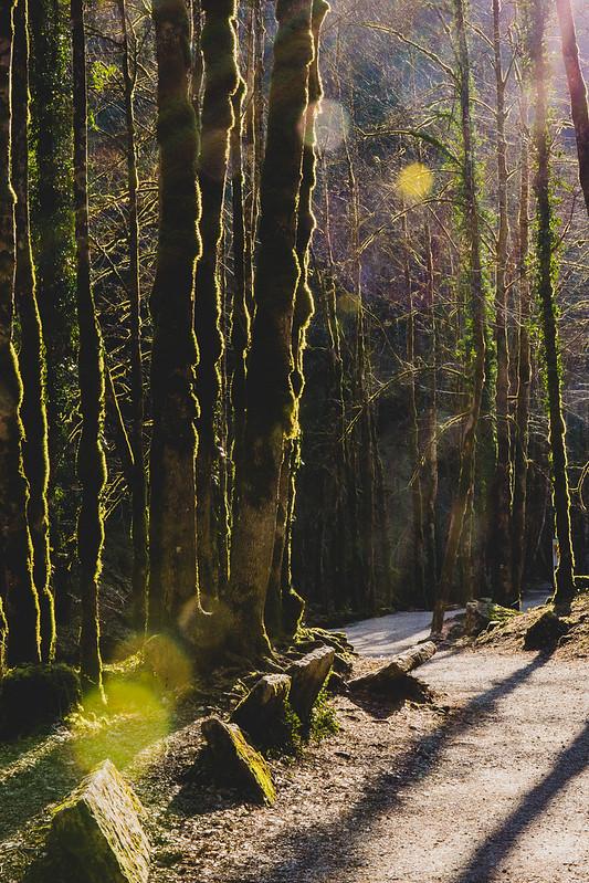 Cascades du Hérisson - Sentier du Grand Eventail - Jura - Avril 2018