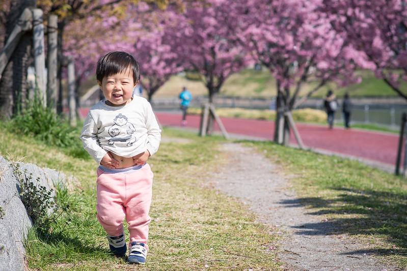 汐入公園の桜並木を歩く子ども