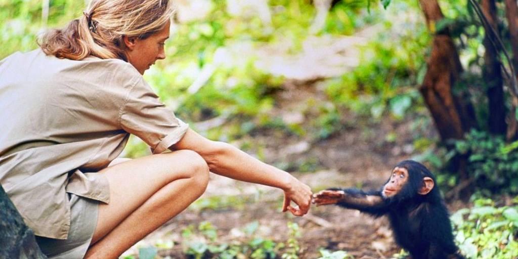 Jane Goodall : Être une femme était essentielle à mon succès dans un domaine dominé par les hommes