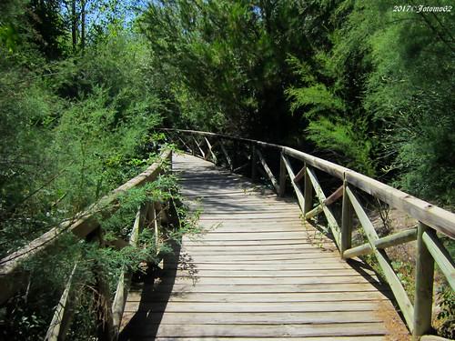 El puente del Area Recreativa